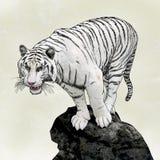 Tigre bianca illustrazione vettoriale