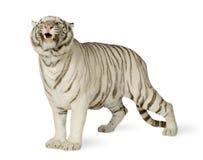 Tigre bianca (3 anni) Immagini Stock Libere da Diritti