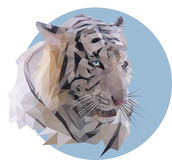 Tigre bianca su un fondo blu Immagini Stock
