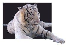 Tigre bianca su un fondo nero Fotografia Stock Libera da Diritti