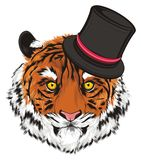 Tigre in black hat Fotografie Stock Libere da Diritti