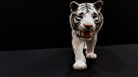 Tigre blanco Fotos de archivo