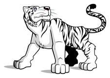 Tigre branco Foto de Stock Royalty Free
