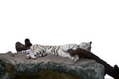 Tigre branco isolado com rocha Foto de Stock Royalty Free