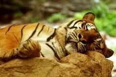 Tigre che dorme sulla roccia fotografie stock