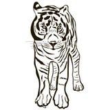 Tigre d'isolement noir et blanc Photos libres de droits
