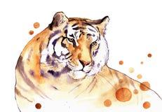 Tigre da aquarela Imagem de Stock Royalty Free