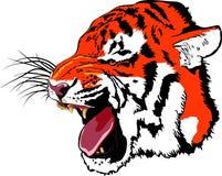 Tigre da rosnadura fotografia de stock