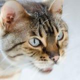 Tigre dans le salon photo stock