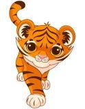 Tigre de bébé Photographie stock
