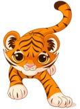 Tigre de bebé que se agacha Imagen de archivo