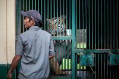 Tigre de bebé tres llevado en Ragunan Parque-Jakarta el 10 de abril de 2013 Fotos de archivo libres de regalías