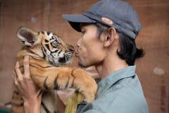 Tigre de bebé tres llevado en Ragunan Parque-Jakarta el 10 de abril de 2013 Fotografía de archivo libre de regalías