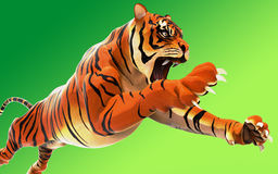 Tigre de Bengal perigoso que ruje e que salta isolado Fotos de Stock Royalty Free