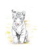 Tigre de blanc de chéri Images stock