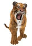 Tigre de chasse Photo libre de droits