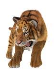 Tigre de chasse Photographie stock