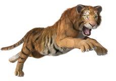 Tigre de chasse Photo stock