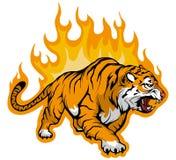 Tigre de grondement Bengale sur le feu, Tiger Mascot illustration libre de droits