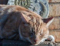 Tigre de sommeil Photos libres de droits