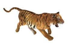 Tigre de trot Image stock