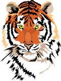 Tigre de vecteur Images stock