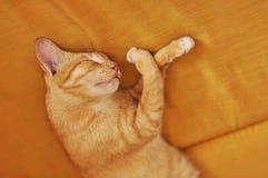 Tigre del sueño del sofá del gato Fotos de archivo