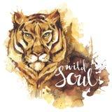 Tigre dell'acquerello con anima selvaggia di parole scritte a mano Animale africano Illustrazione di arte della fauna selvatica P illustrazione di stock