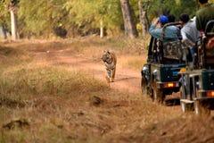 Tigre di Bengala reale Fotografie Stock Libere da Diritti