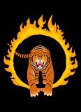 Tigre do incêndio Imagens de Stock Royalty Free