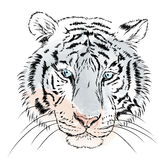 Tigre do vetor watercolor ilustração stock