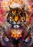 Tigre doux de portrait sur le fond ornemental Image stock