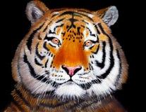 Tigre drenado mano ilustración del vector