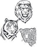 Tigre e leopardo del leone Immagine Stock Libera da Diritti
