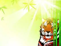 Tigre en el bosque de bambú Fotografía de archivo libre de regalías