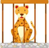 Tigre en jaula Fotografía de archivo libre de regalías
