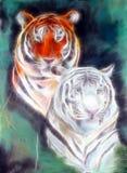Tigre enojado Fotos de archivo libres de regalías