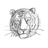 Tigre esboçado da garatuja Foto de Stock Royalty Free