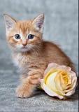 Tigre-gatito del jengibre Foto de archivo