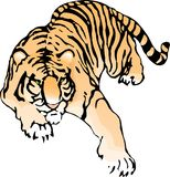 Tigre imperceptiblement de acroupissement Photos stock