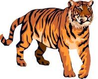 Tigre irritado Fotografia de Stock Royalty Free