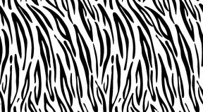 Tigre Modele a textura que repete preto monocromático & branco sem emenda Foto de Stock