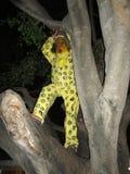 Tigre na árvore imagens de stock royalty free