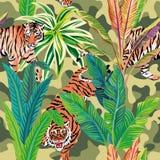 Tigre nei precedenti tropicali dei militari di marrone della giungla Immagine Stock