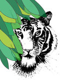Tigre nell'ambito dei leafes Fotografia Stock