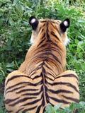 Tigre nell'erba Fotografie Stock