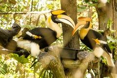 Tigre, parque zoológico, árbol, hambriento, Foto de archivo libre de regalías