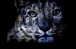 Tigre projetou no palácio do parlamento Imagens de Stock