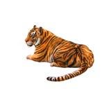 Tigre que coloca a vista afastado imagens de stock royalty free