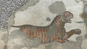 Tigre que defende-se contra caçadores Imagens de Stock